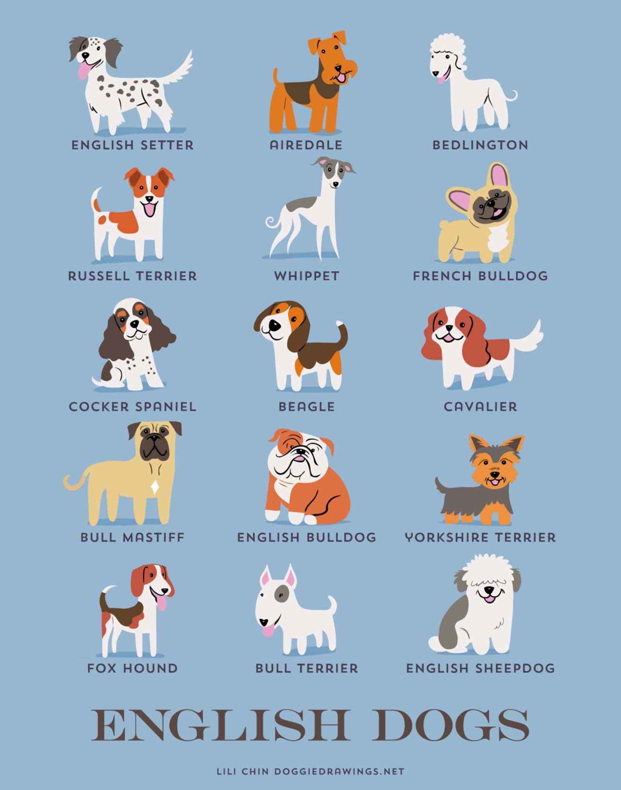 Origin Of Dogs: Cute Illustration By Lili Chin Show Where Dog Breeds Originating From #21: English Dogs