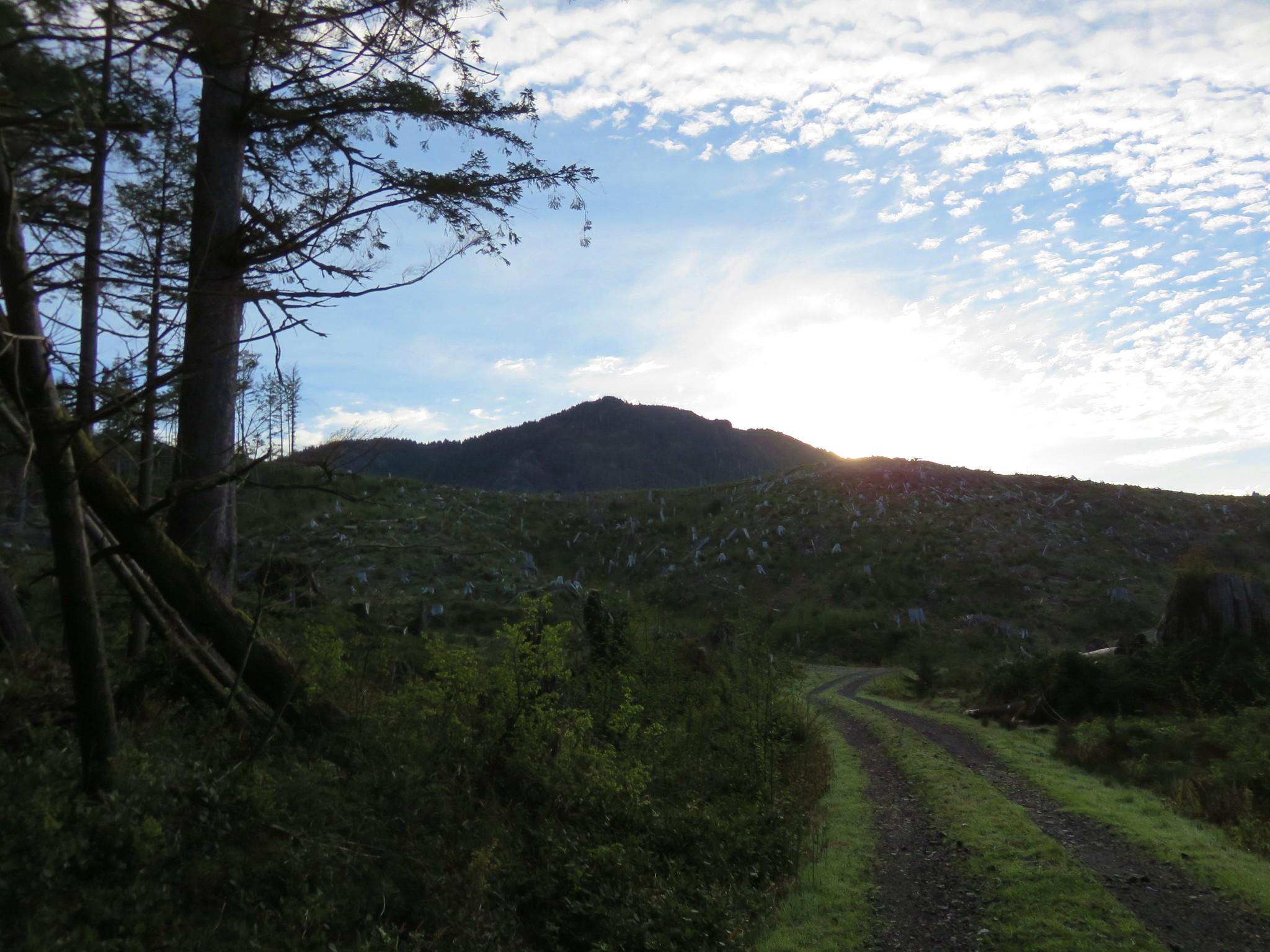 Logging road to Angora Peak