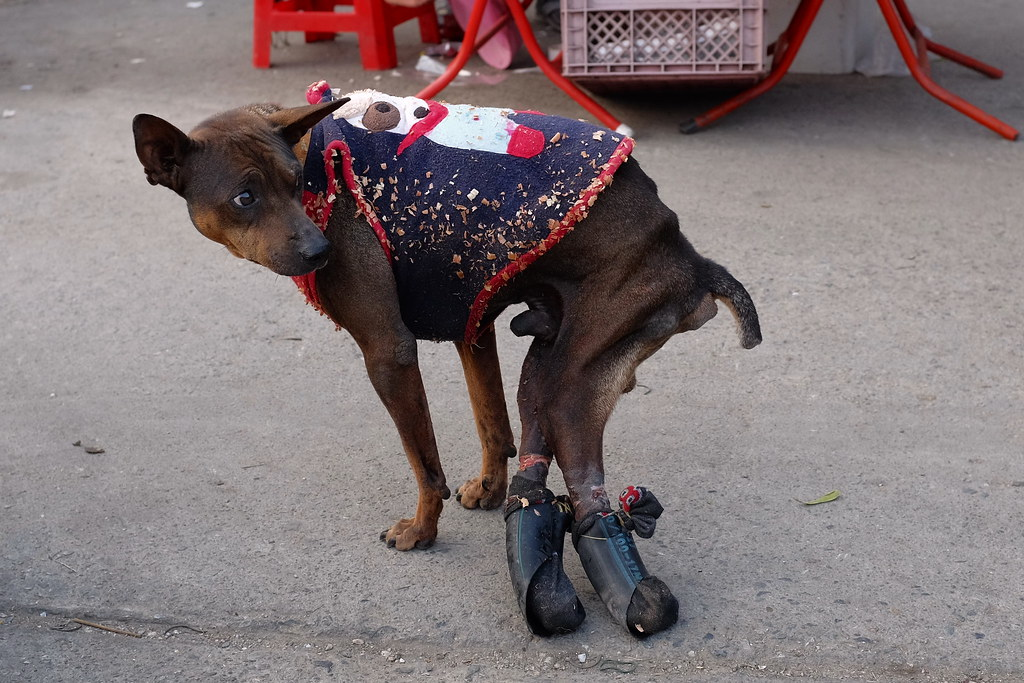 Two legged dog | I'd love to get this dog some wheels. Bor ...