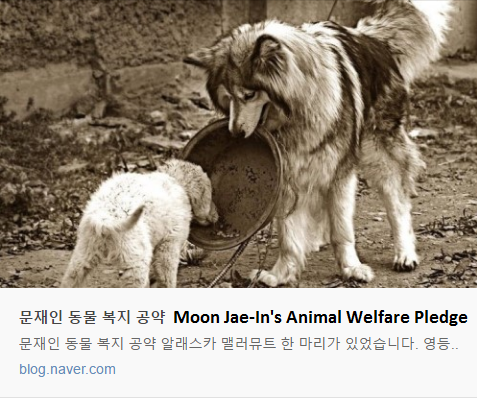 Moon Jae-In's puppies.