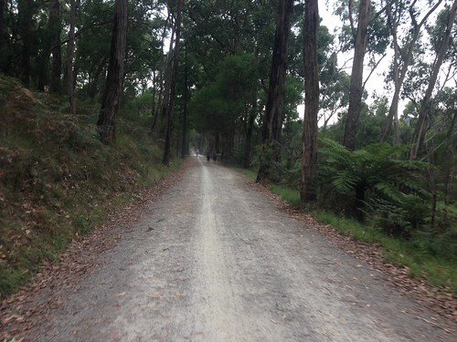 Lilydale-Warburton Rail Trail, Mount Evelyn