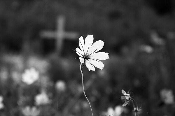 Poetas amazônicos. Causa mortis: poeta descuidado, morte e poesia