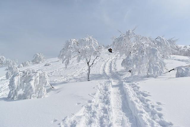 守門岳 登山道の樹氷