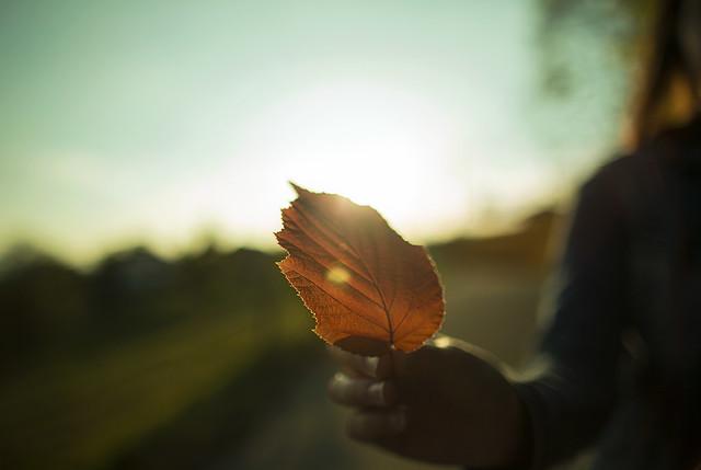 Italian Leaf