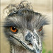 I'm so cool....:)))  (Emu)