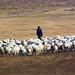 Shepherd, Vashlovani National Park, Georgia