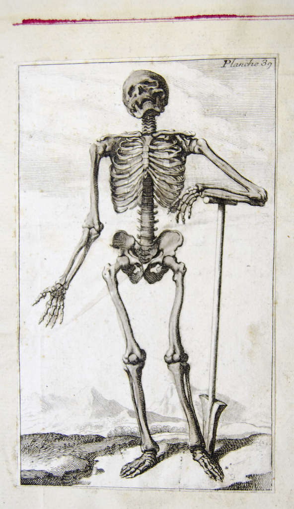 Skeleton French Anatomical Engraving Engraved Plate Show Flickr