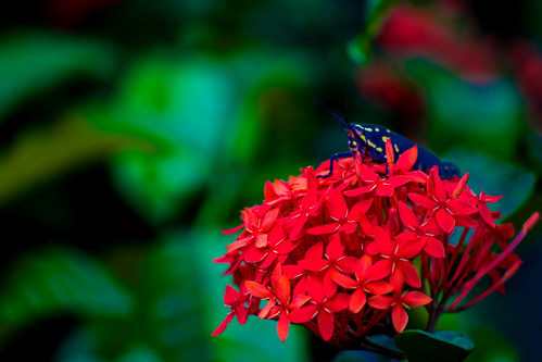 bugFlower2b | כושן ארסי