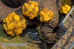 Shin_Godzilla_Diorama_Exhibition-135
