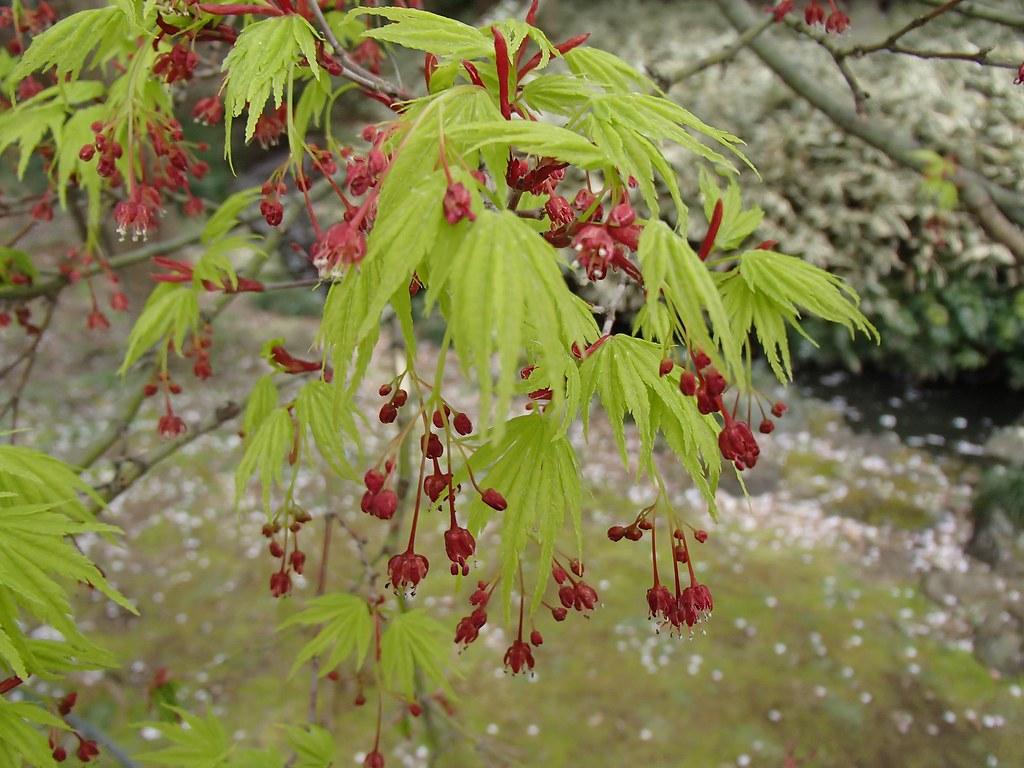 Okänd blomma/buske