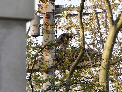GT Hawk Nest - 2775