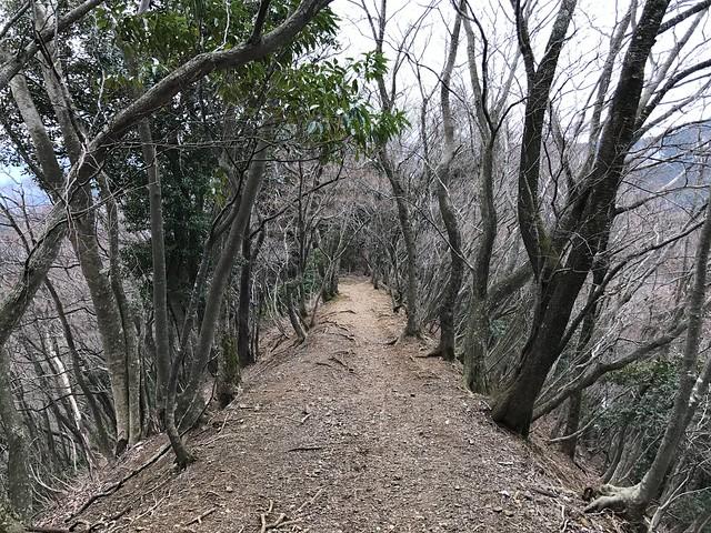 霊仙山 落合ルート 登山道 尾根