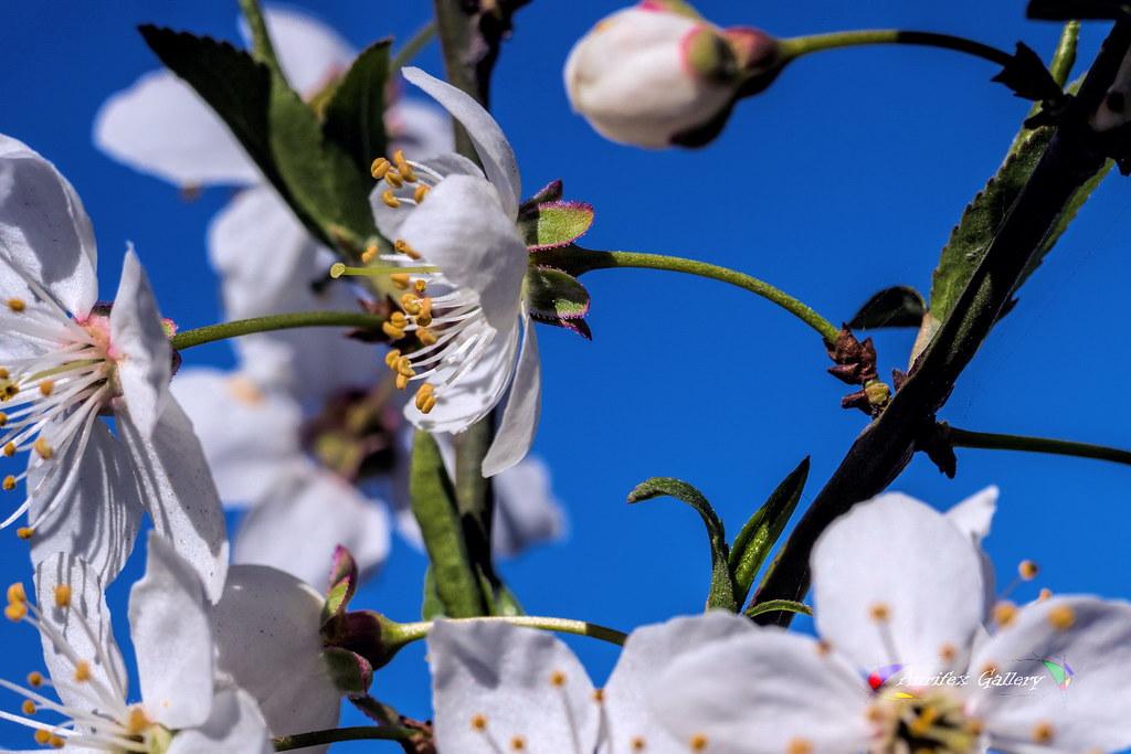 Flowering in Spring