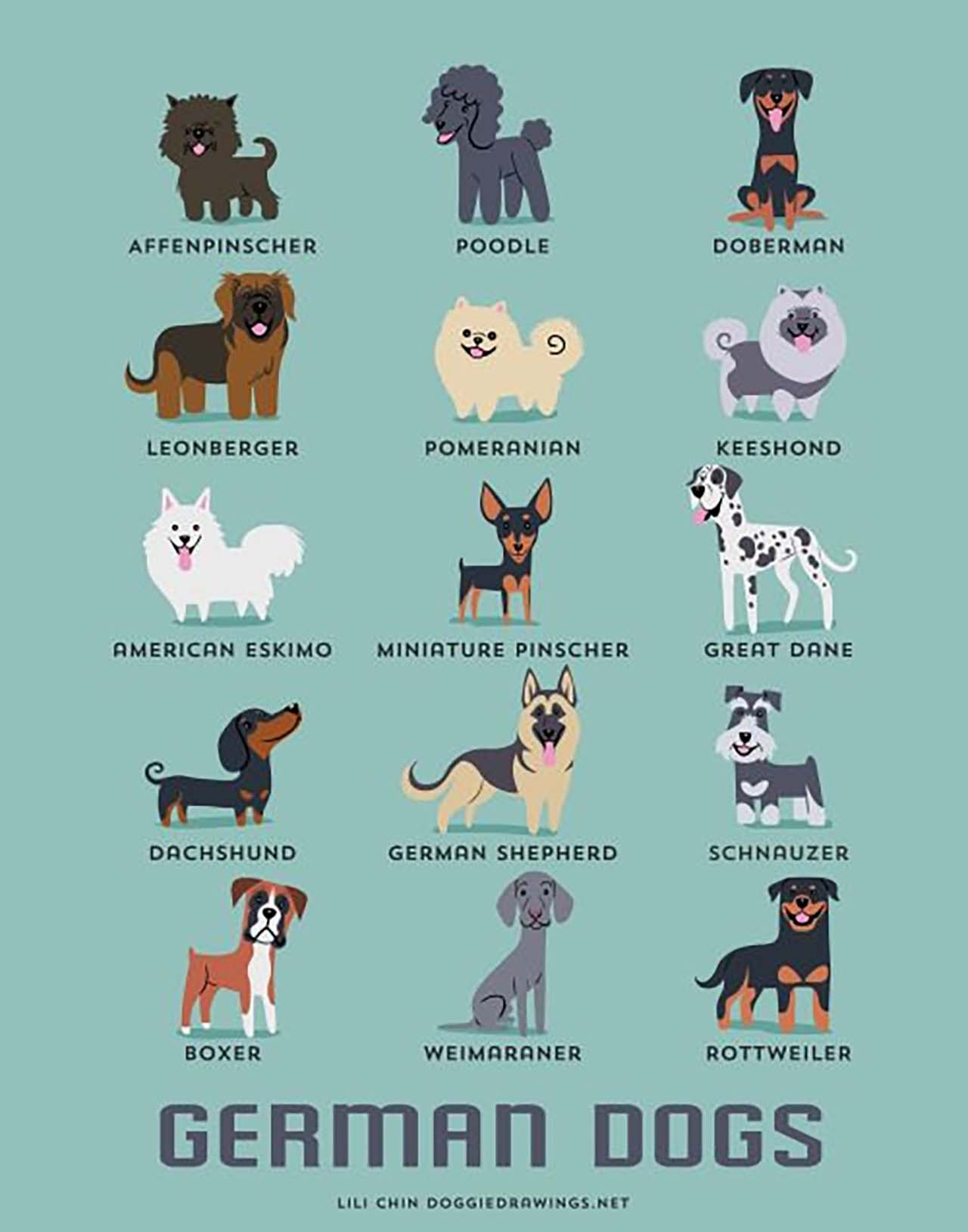 Origin Of Dogs: Cute Illustration By Lili Chin Show Where Dog Breeds Originating From #6: German Dogs