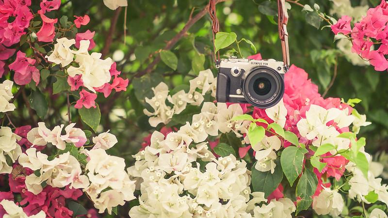 OLYMPUS PEN-F|LEICA DG 12mm f/1.4