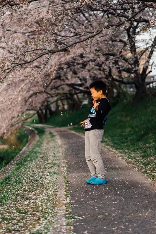 CherryBlossom_06