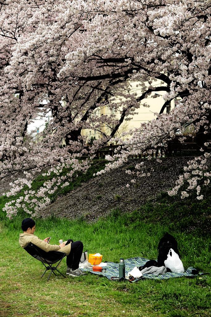 Chilling Under Blossom, Tokyo