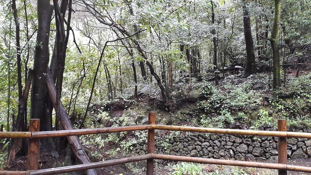 Bosque de Los Tilos en San Andrés y Sauces