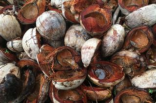Sibale island - San Vicente coconut shells