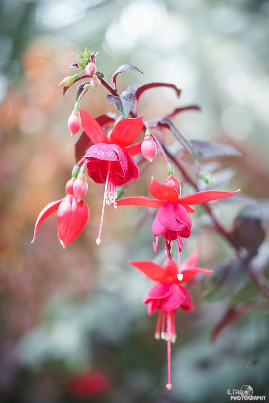 Blossom Bliss - 022