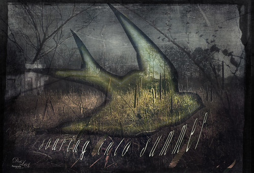 Grunge image of a Bird soaring into summer over a Field