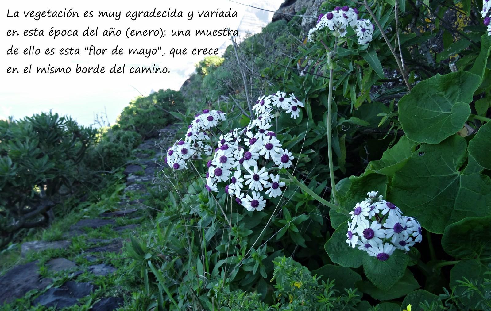 7 Flor de mayo
