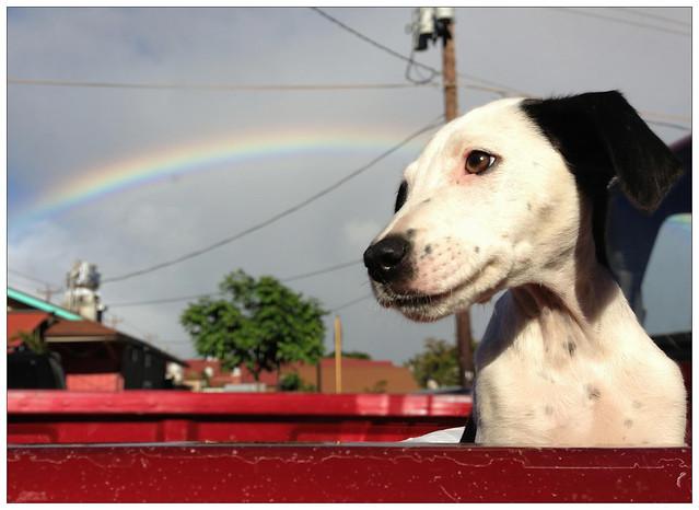 Pup Truck Food Truck