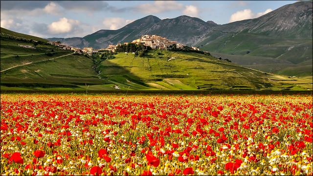 Castelluccio di Norcia Fioritura 2013 | Flickr - Photo ...