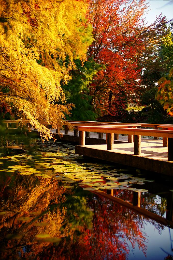 RORO Vandusen Botanical Garden In Autumn | By TOTORORO.RORO