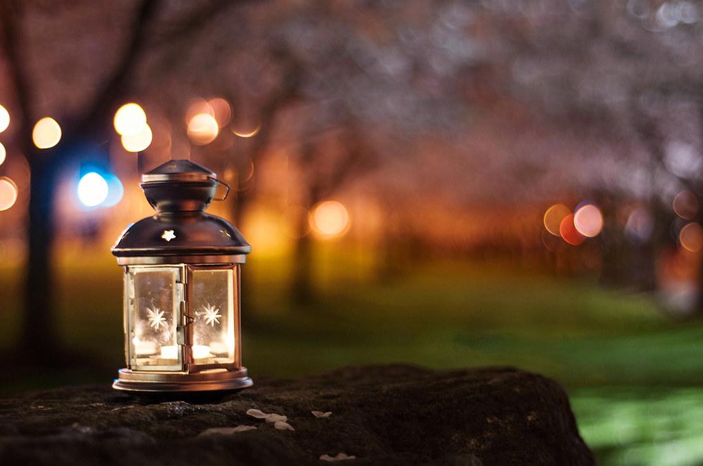 under the glow of sakura