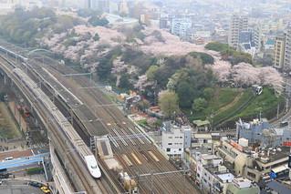 桜満開の飛鳥山公園とE4系