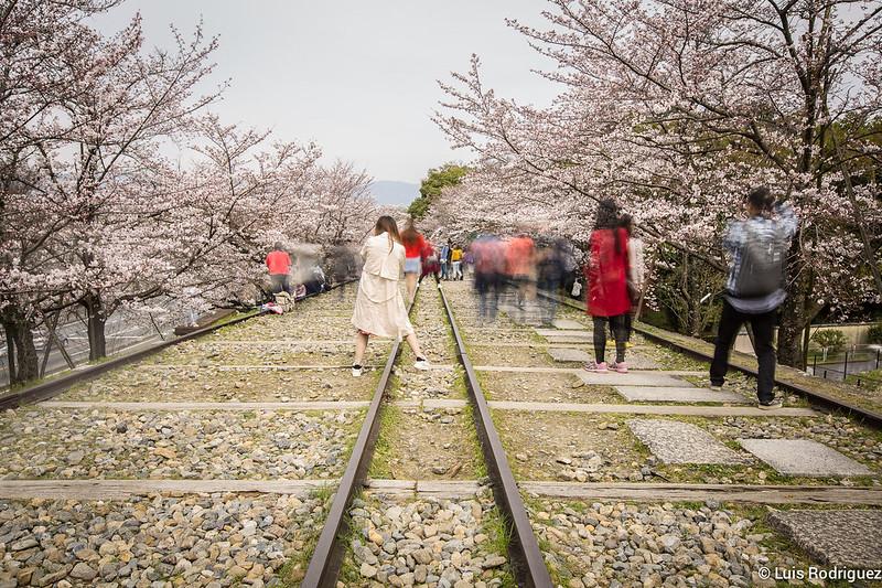 Hanami-cuesta-Keage-Kioto-35