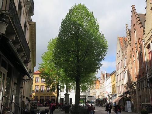 A leafy square