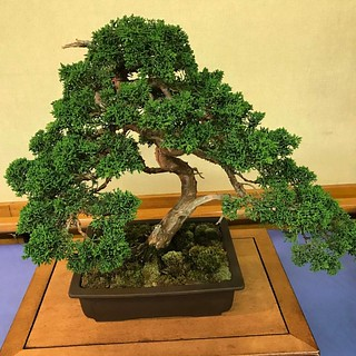 Bonsai | by clatko