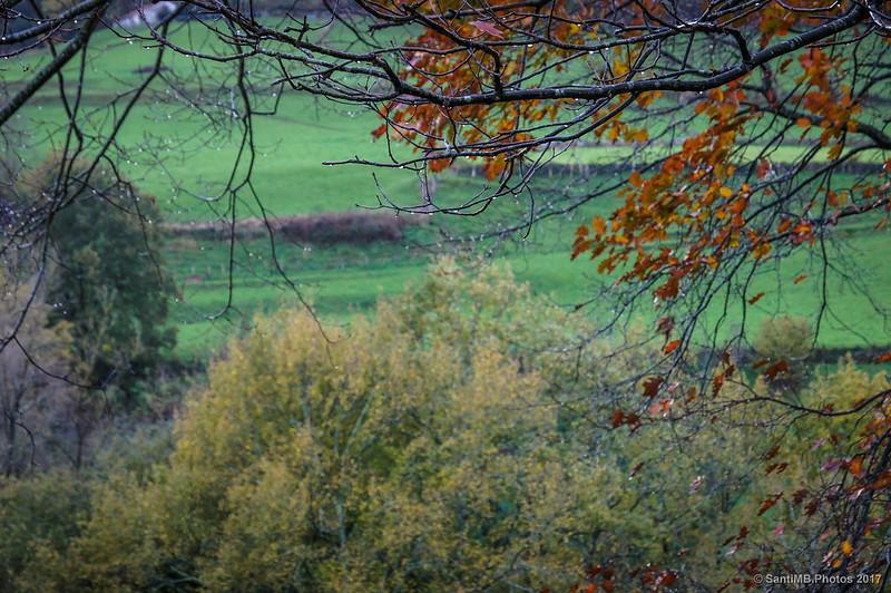 Gotas de lluvia en ramas de roble