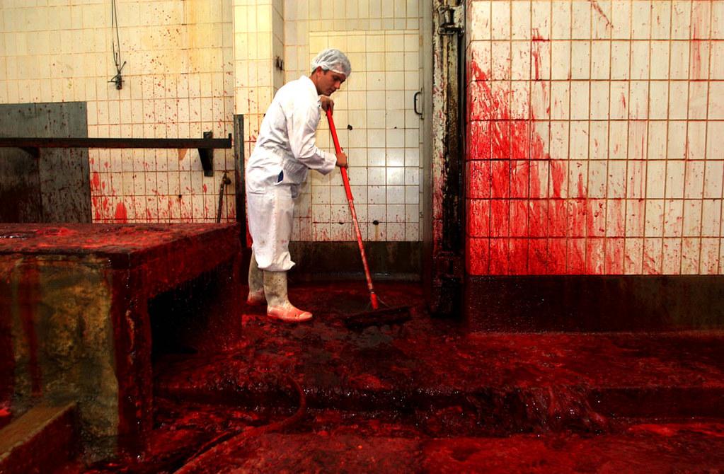 09 Lr Slaughterhouse The Killing Floor For Cattle Oxen