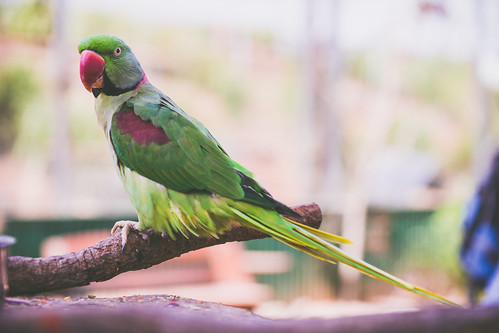LisaSista visits Maleny Bird World | by Monique Delanoue