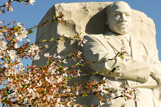 Cherry blossoms and Martin Luther King  Memorial | by runneralan2004