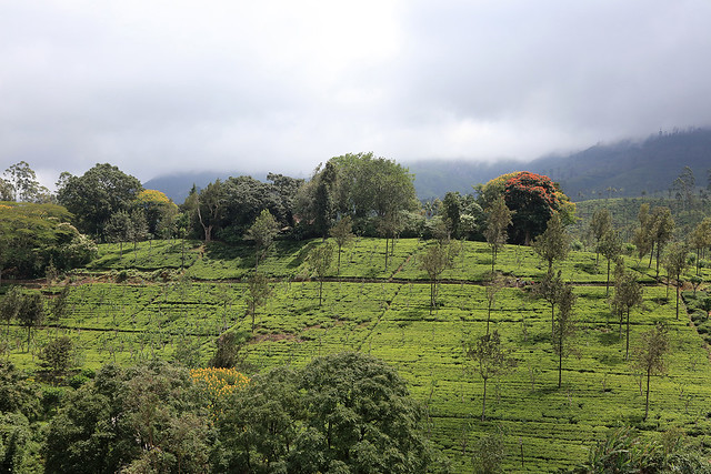 PW-Ceylon-Tea Trails8