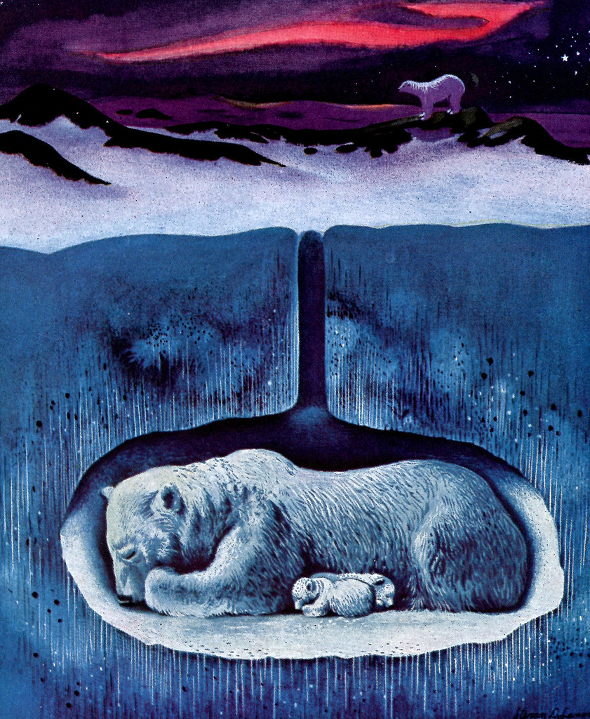 Hibernating Polar Bear | Illustration for a 1938 Travelers ...