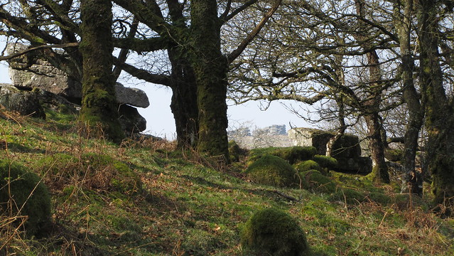 Aller Brook Outcrop, Combestone in the distance