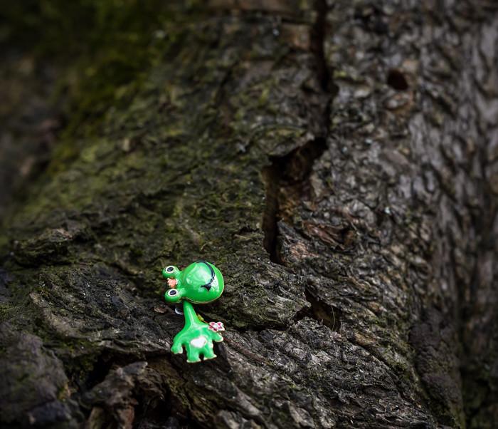 vihreä sammakko puussa