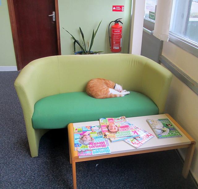 Glenwood Library Cat