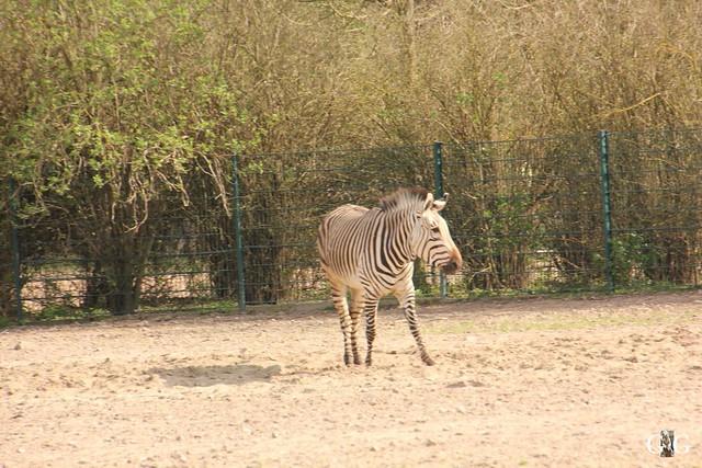 Frühlingstag Tierpark Friedrichsfelde am 02.04.2017129