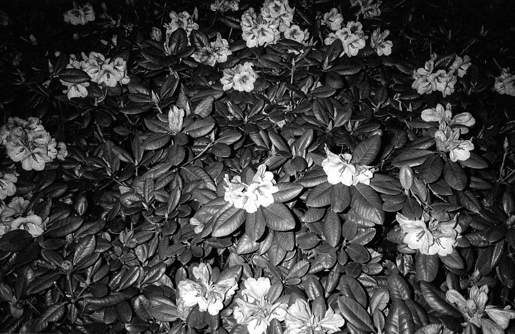 when flowers start to speak