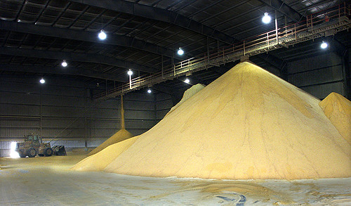 A nearly 100 percent biodegradable kitty litter made from dried distiller's grains, left over from corn-ethanol production