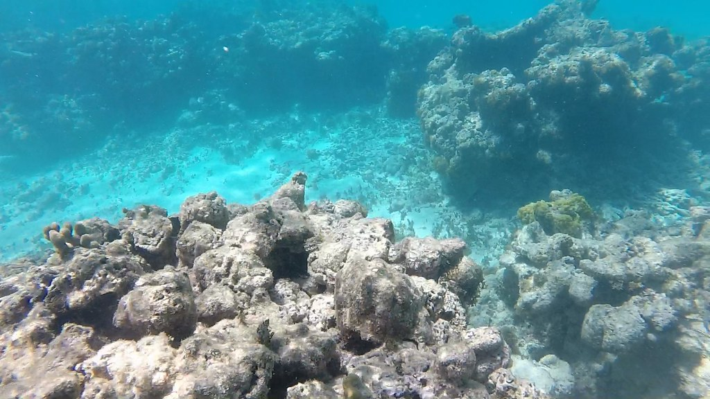Cades Reef, Antigua, Antigua Reef Riders