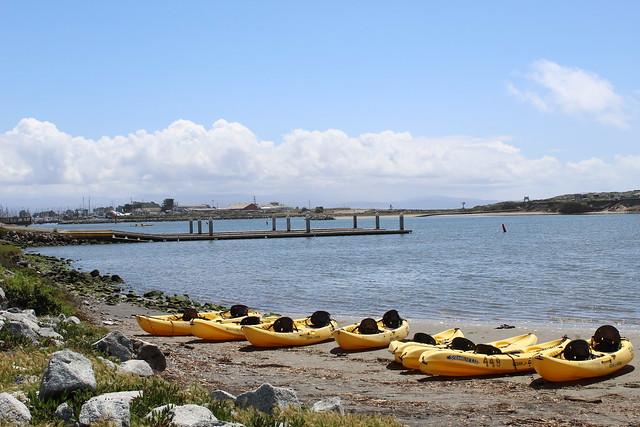 Monterey Bay Kayaks at Elkhorn Slough