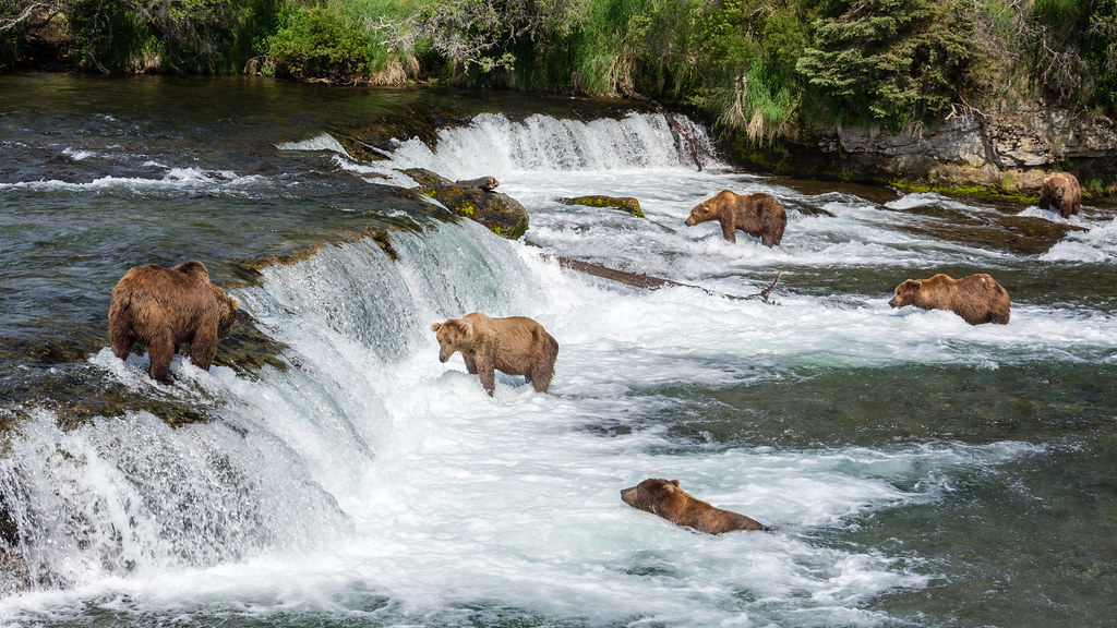 Bears Group For Tours