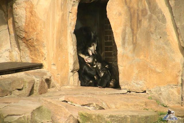 Lippenbär Nachwuchs 31.03.2017 im Zoo Berlin 020